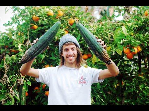 Aaron Homoki's Phoenix Garden (Update)