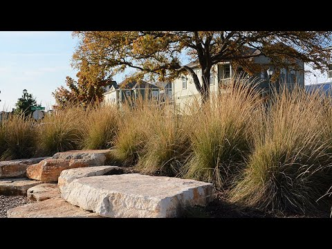 Drought Tolerant: What Does That Mean? | Daphne Richards | Central Texas Gardener