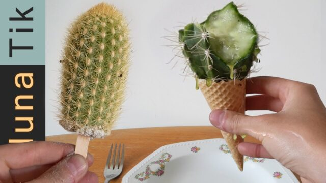 CACTUS ICE CREAM!! | ASMR eating sounds no talk