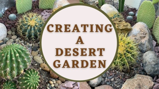 Creating a Desert Garden (Part1) | Cactus Garden | Desert Landscape