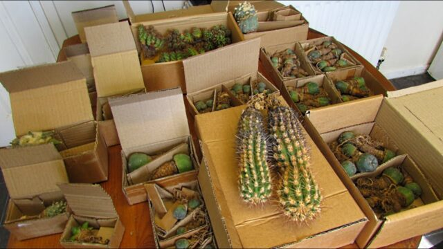 Rare Cactus Plants Unboxing – Unbelievable MUST WATCH