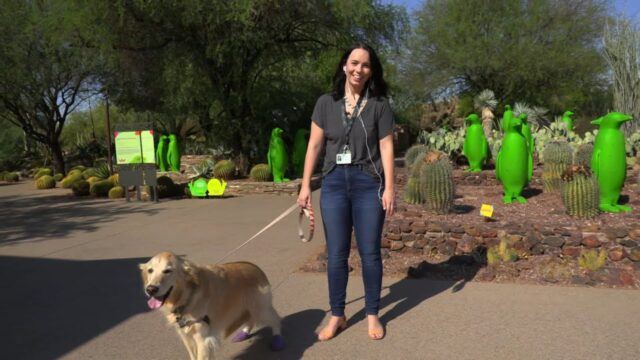 It's Dog Days at the Desert Botanical Garden