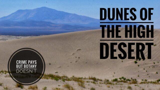 Dune Plants of the High Desert