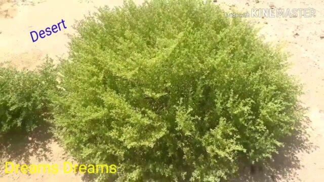 Desert Garden|#Desert|#Flowers|