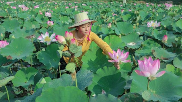 Cooking Lotus Dessert Recipes and Crispy Lotus Flowers In my Homeland