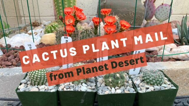 Cactus Plant Gifts from Planet Desert