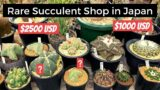 Rare Succulent & Cacti Nursery Tour in Tokyo | Japan Series | Ep 91