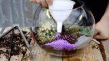 Succulent and Cacti Fish Bowl Terrarium 🌵 || West Coast Gardens