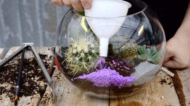 Succulent and Cacti Fish Bowl Terrarium 🌵 || West Coast Gardens