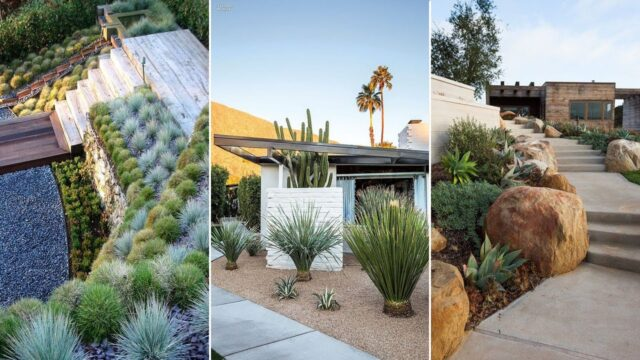 10 Drought-Tolerant Landscaping Ideas for a Modern Low-Water Garden | garden ideas