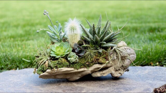 Rock Planter w/ Succulents, Air Plants & Cacti