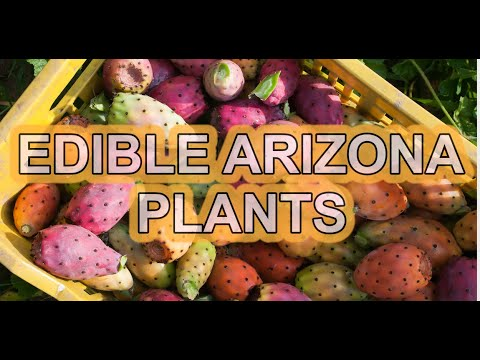 Edible Plants in Arizona to Forage
