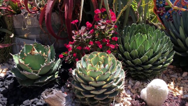 Private Succulent Garden Tour with Laura Eubanks