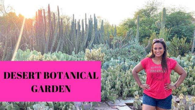 Desert Botanical Garden Phoenix, Arizona 4k l Night lights l Rosaly Rentas