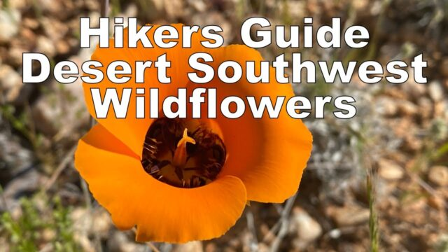 Hiker's Guide: Southwest Desert Wildflowers