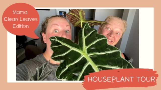 Houseplant Tour | Mama Clean Leaves Edition | Before & After DESERT PLANTS!
