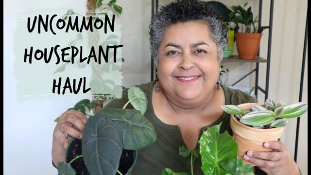 Uncommon Houseplants Haul | Plant Stand of Arizona