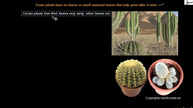 Desert Ecosystem (Adaptations in plants), Biology Lecture | Sabaq.pk |