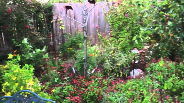 Lisa's Landscape and Design – Native Landscapes Part 1
