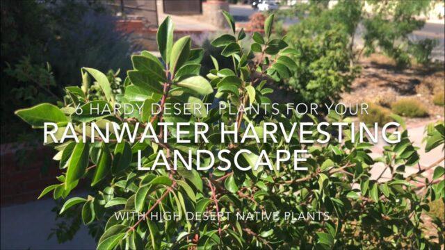 Six drought tolerant plants for southwestern desert landscapes