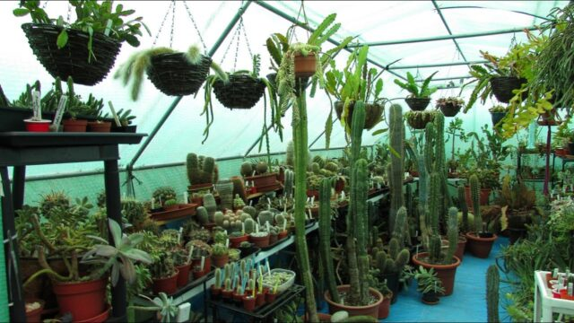 Cactus & Succulent Polytunnel Revamp and Plant Collection Tour