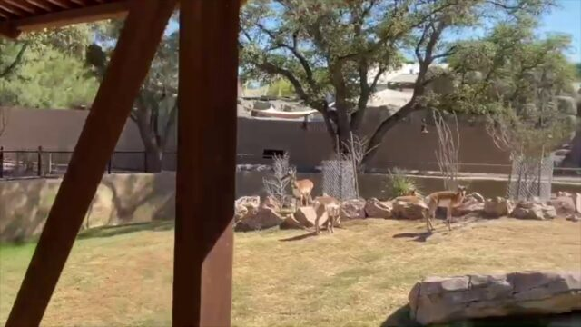 Visit the Chihuahuan Desert section of the El Paso Zoo!
