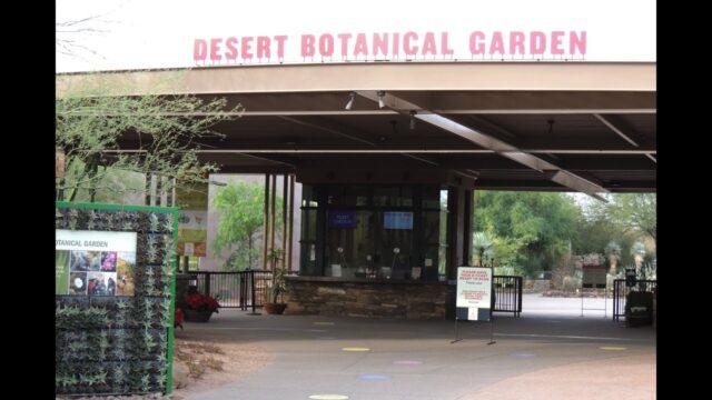 Desert Botanical Garden, Phoenix 11-12-2020