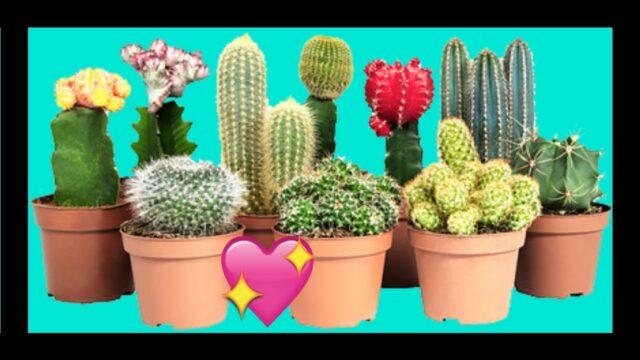 17 Tipos De Cactus y Sus Nombres Que Puedes Tener En Tu Jardin 2020