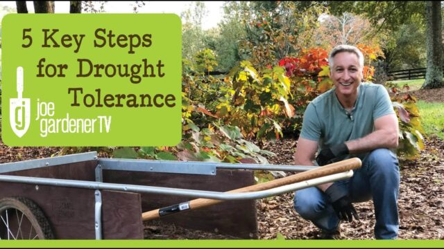 5 Key Steps for a Drought-Tolerant Landscape