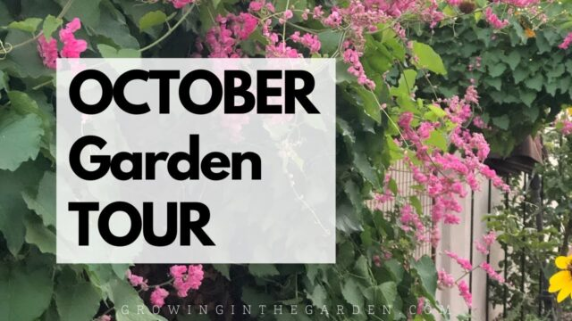 OCTOBER GARDEN TOUR – Mesa, Arizona Garden, Zone 9b