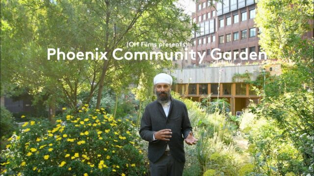 My Phoenix Garden