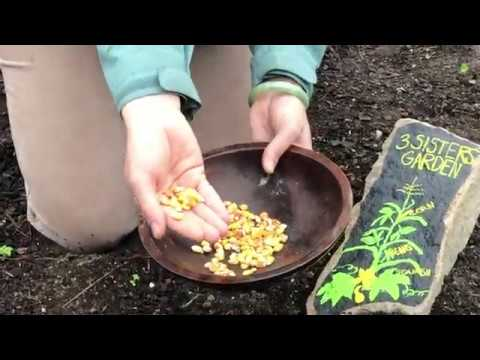 Companion Planting in the Children's Garden