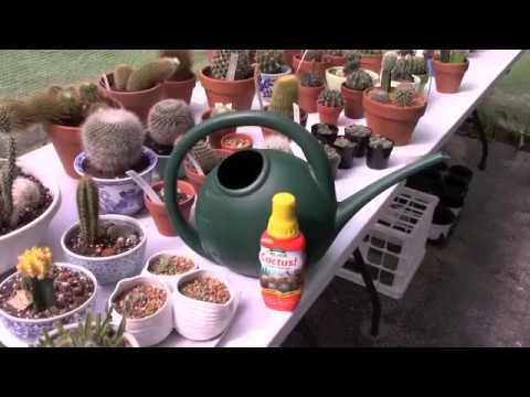 Fertilizing Cacti and Succulents