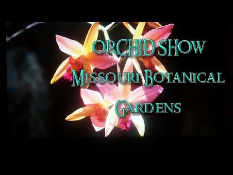 Orchid Show 2017 Missouri Botanical Gardens