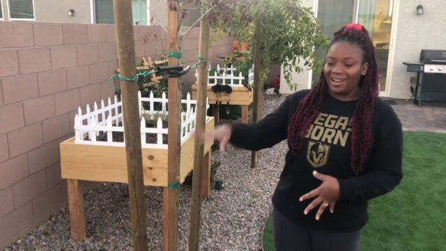 Backyard Tour! Las Vegas Desert Landscaping