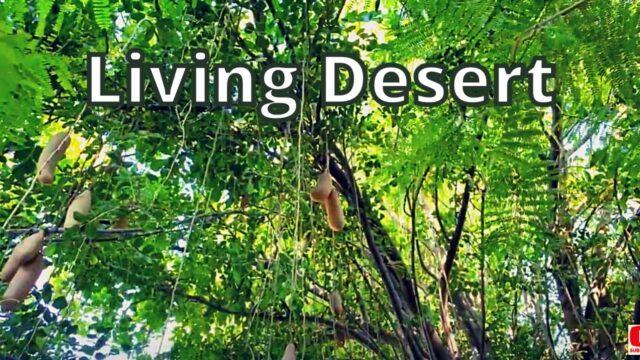 The Living Desert Zoo and Gardens, Palm Desert, California [4K]