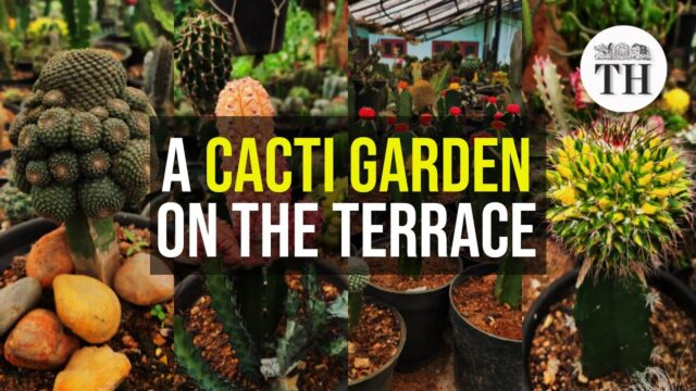 Meet the man who has 2500 cacti plants on his terrace