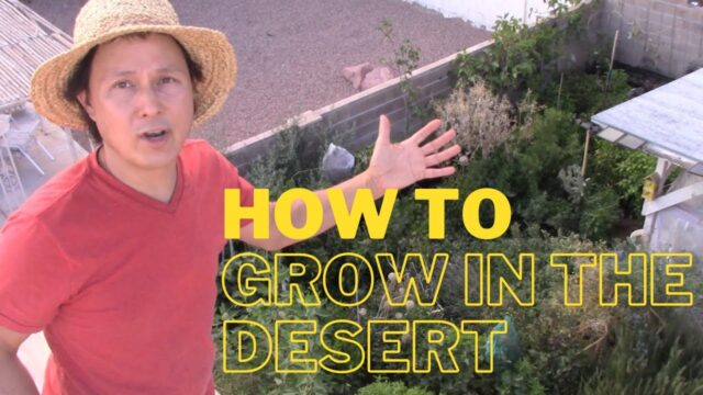 How to Have a Successful Garden in the Desert or Anywhere Top 10 Tips