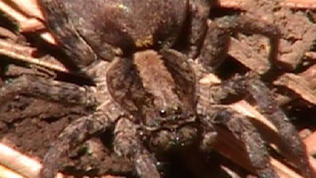 The Nature Explorers South Mogollon Rim Arizona Part 5 of 11 Arachnids Spiders Ecosystem Example
