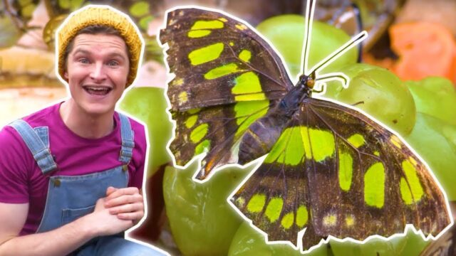 LEARN COLORS AT THE BUTTERFLY GARDEN 🦋 Fun Learning Videos For Children  | Cody – WildBrain