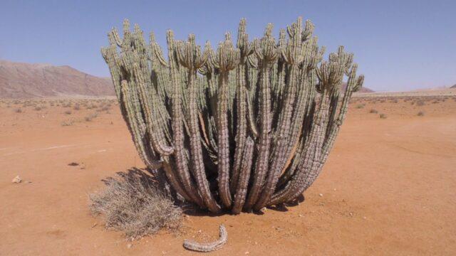 World's BIGGEST Flowers! (World's Most Spectacular Plants episode 11 of 14) | Stewart McPherson