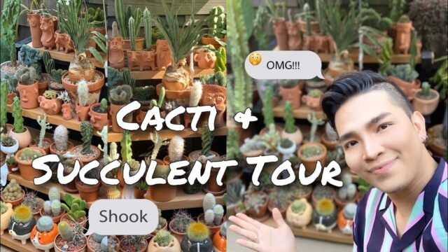 Cacti & Succulent Tour 2020 | Cute Planters | Rare Cacti Collection