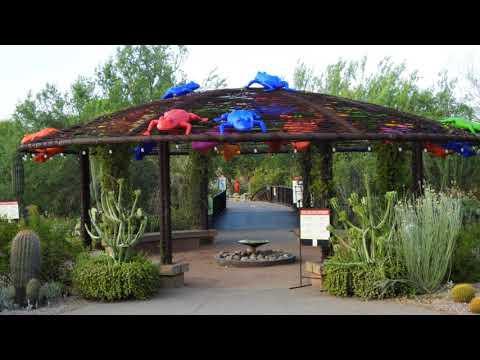 Phoenix Desert Botanical Garden July 25, 2020