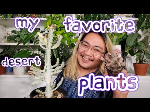 My Top 5 Favorite Desert Plants!