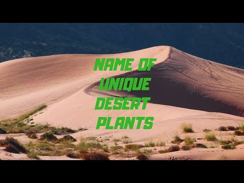Name of Different types of Desert Plants.