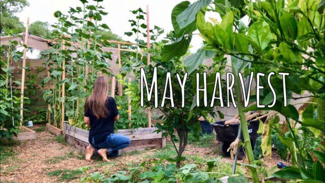 A Peaceful Harvest – No Talking ASMR- Phoenix, AZ