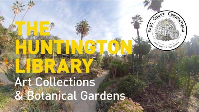 Huntington Gardens Desert Garden Visit (Part 1)