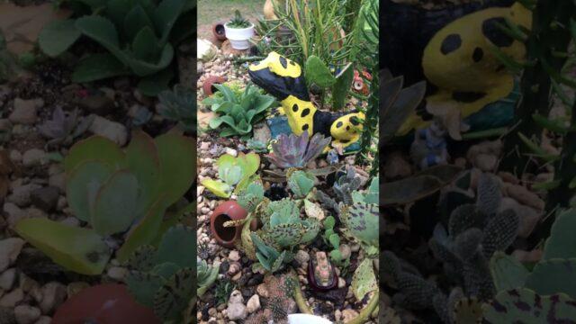 Cactus and Succulents  (my little garden/landscape)
