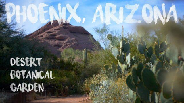 Nature (Arizona – Desert Botanical Garden)
