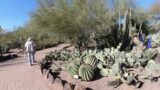 Desert Botanical Garden Arizona